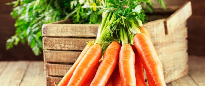 Польза и вред моркови при беременности