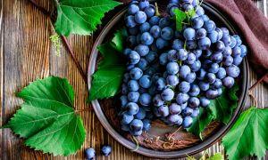 Польза и вред винограда для беременных