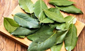 Рецепты с лавровым листом для выкидыша